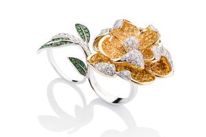 Cantamessa Rosa Inglese yellow Ring RRI1589